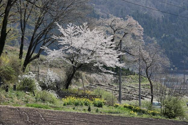 発知の春風景