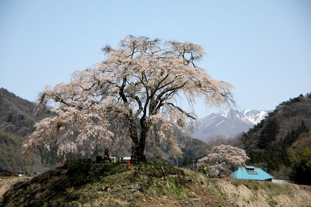 武尊連峰の残雪が見える上発知の枝垂れ桜