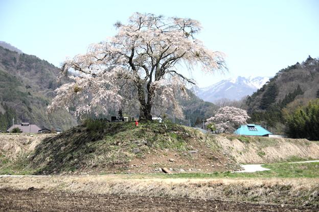 上発知の枝垂れ桜風景