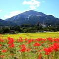 武甲山を望む寺坂棚田の秋