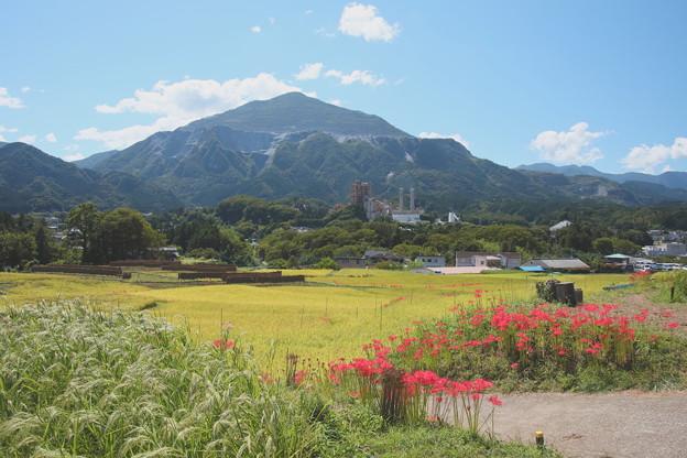 寺坂棚田の彼岸花咲く風景