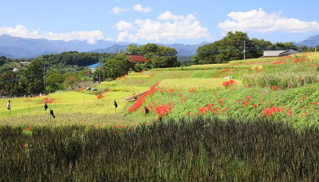寺坂棚田の秋風景