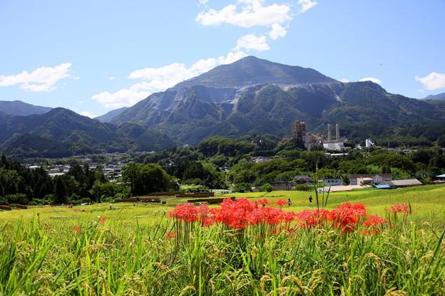 Photos: 武甲山と寺坂棚田の彼岸花