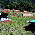 Photos: 寺坂棚田の物置小屋と稲木風景