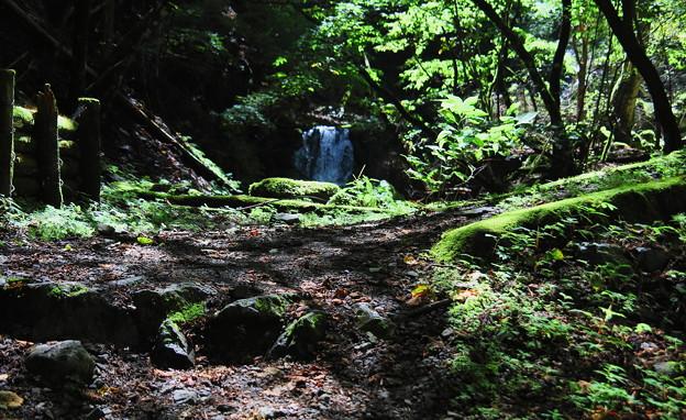 Photos: 丸神の滝への登山道1