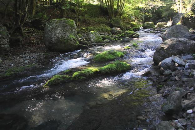 赤平川の渓流3