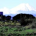 畑の道よりの富士山