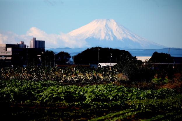 所沢市からの富士山