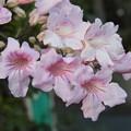 満開の花  名前不明