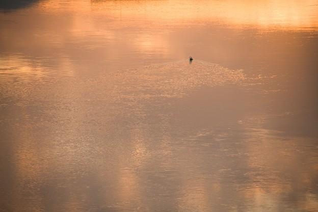 Photos: 川に引っ掛かる