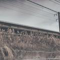 Photos: 電線1
