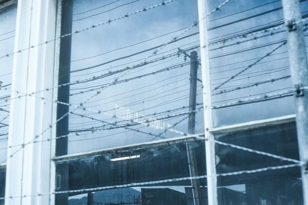 Photos: 電線3