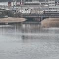 Photos: 汽水域の風景