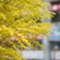Photos: 黄緑
