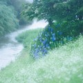 Photos: 川辺
