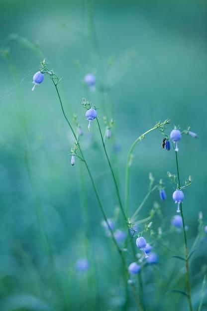 Photos: 花と虫