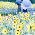 Photos: 日傘と