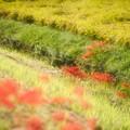 Photos: 秋の畔