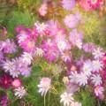 THT たまには花を撮りましょう