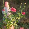 THT 花とパイロン