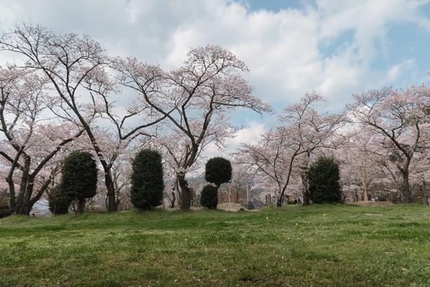 太宰府の竈門神社へ2
