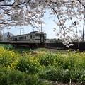 Photos: 花とディーゼル