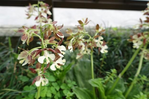 我家の花2