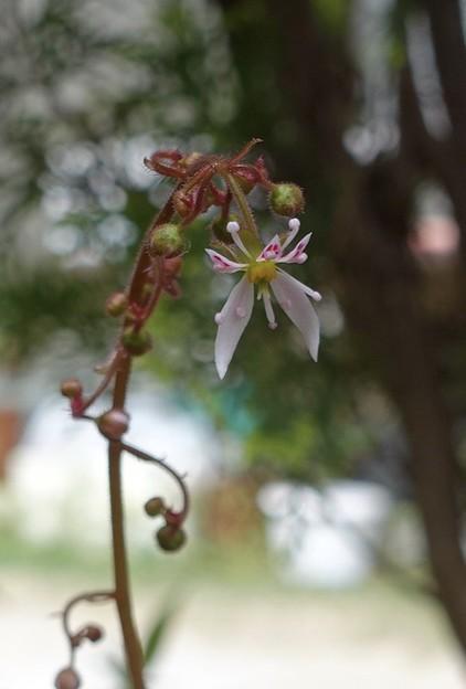 我家の花1