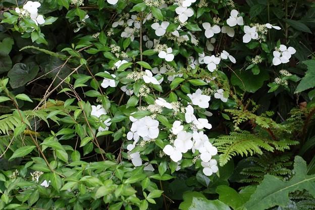 登山道の花1