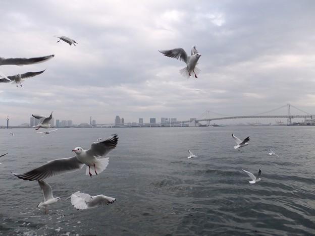 東京1  レインボーブリッジとカモメ