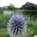 Photos: 青6