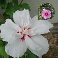 今日の花2