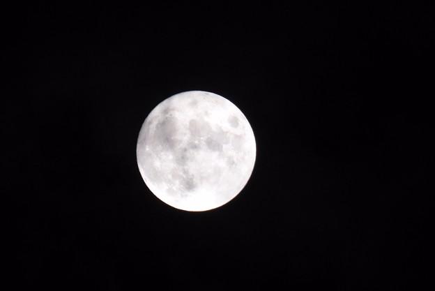 Photos: 宵待月2