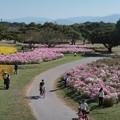 Photos: 海の中道海浜公園1
