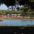 海の中道海浜公園6