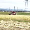 10月 稲刈り風景