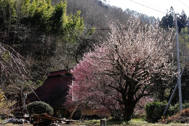 Photos: 山野の春