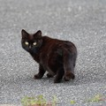 野良猫 (2)