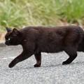 野良猫 (3)