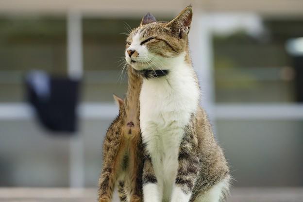 親子猫 (2)