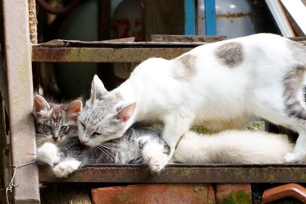 Photos: 親子猫