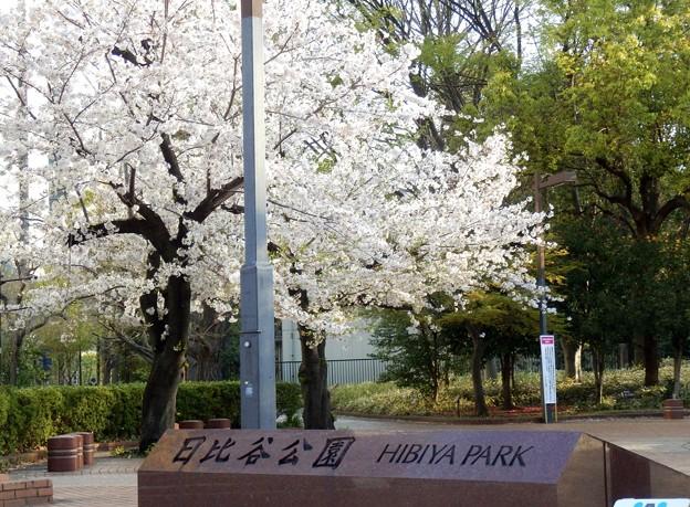 2021/03/27_日比谷公園_2