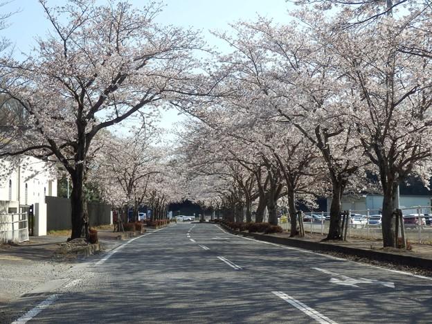 2021/03/27_取手グリーンスポーツセンターへの道
