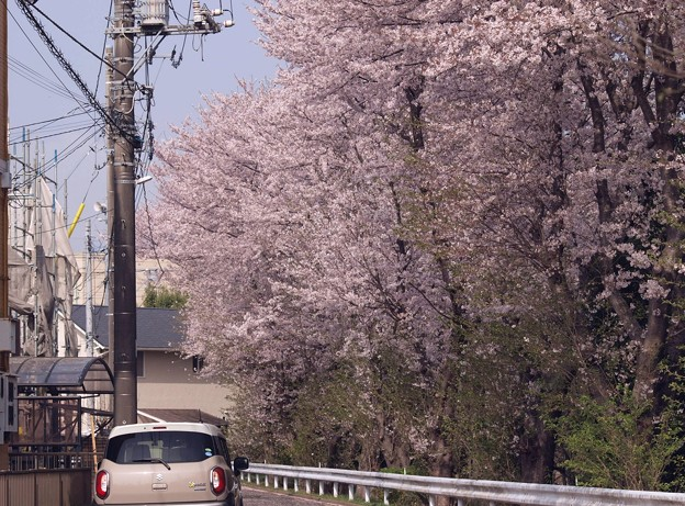 2021/03/31_龍ヶ崎市某所_1