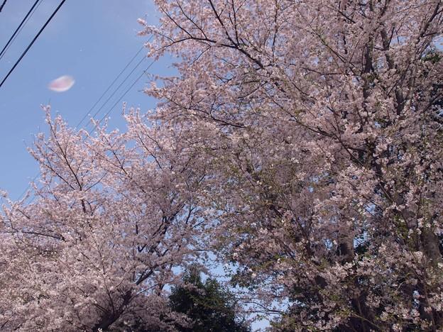 2021/03/31_龍ヶ崎市某所_4