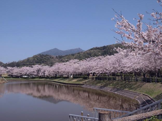 2021/03/31_大池公園_3