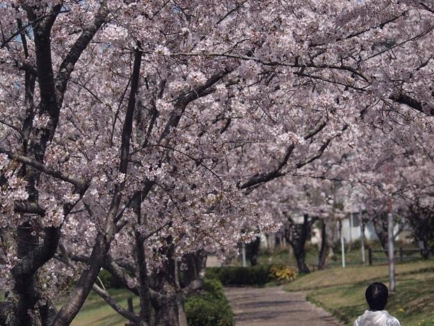 2021/03/31_大池公園_4