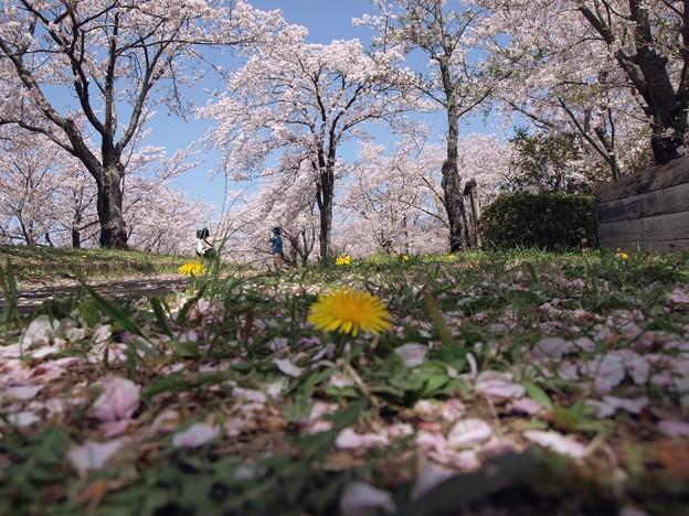 2021/03/31_大池公園_5
