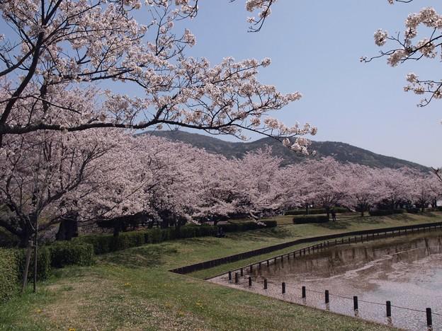2021/03/31_大池公園_6