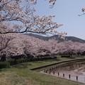 Photos: 2021/03/31_大池公園_6